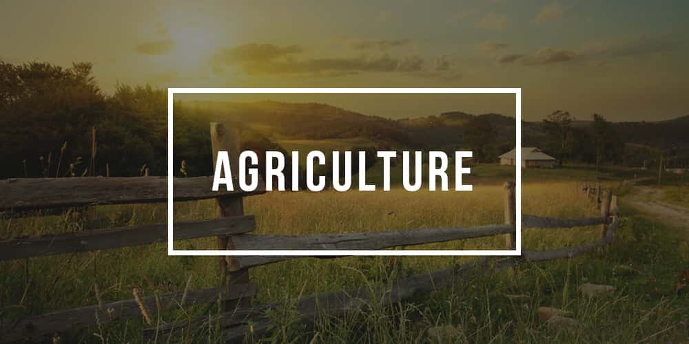 Major in Agriculture